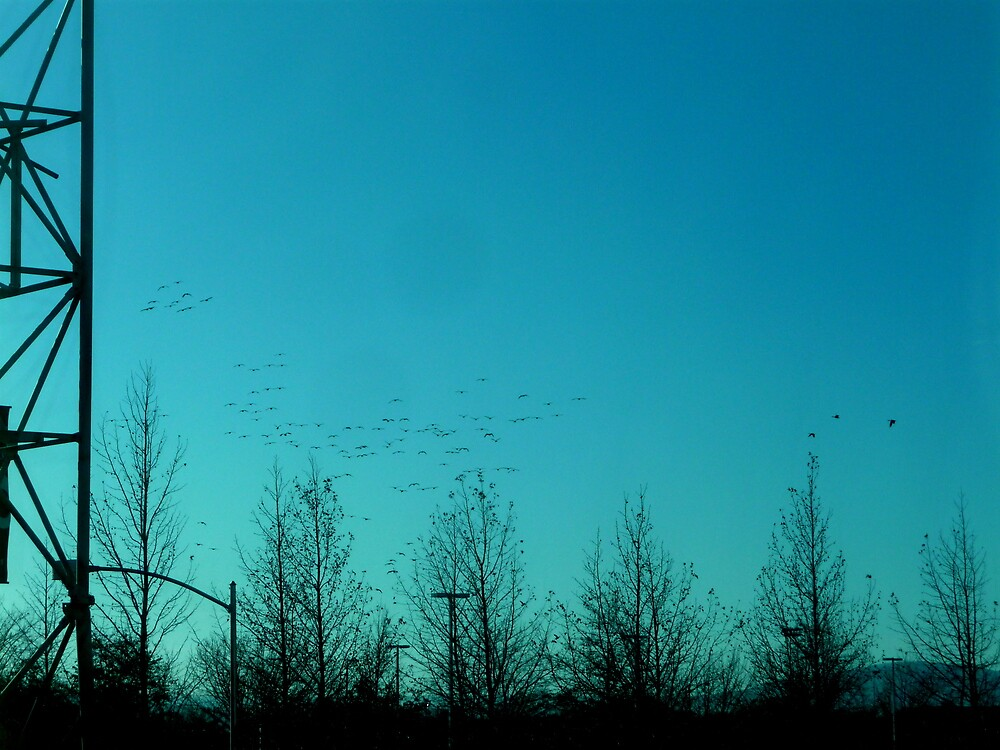 Flock of Birds in Blue by atoth
