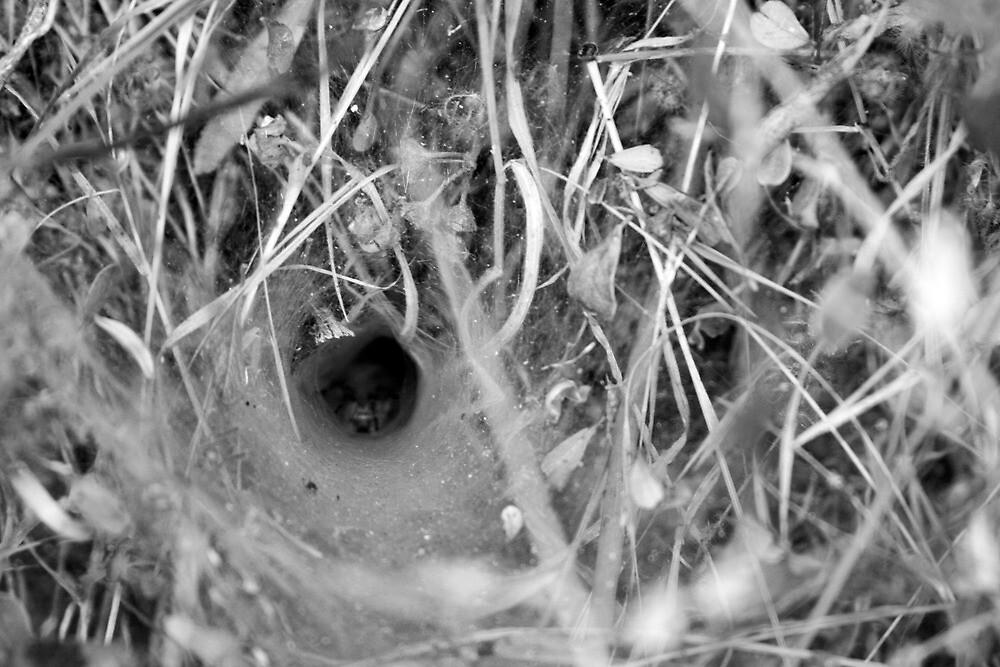 Backbone Trail, Spider by Michael Berns