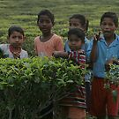 Tea plantation, Assam, India by Denzil