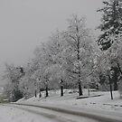 Winter on State St. by KATE! Binns