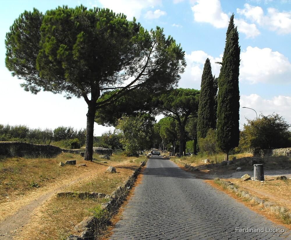 Umbrella pines in Ostia -Rome by Ferdinand Lucino