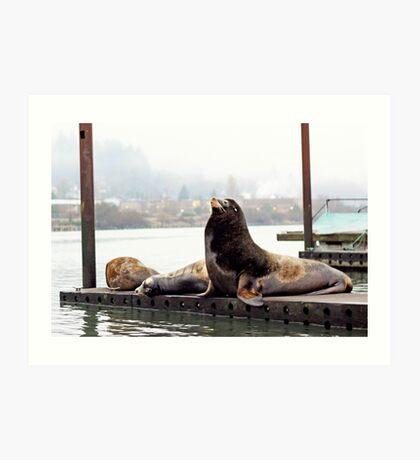 Sea Lions . Astoria, Oregon Art Print