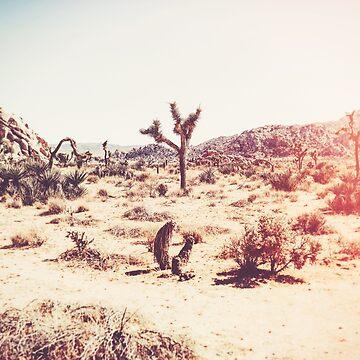 Joshua Tree by CaliforniaPhoto