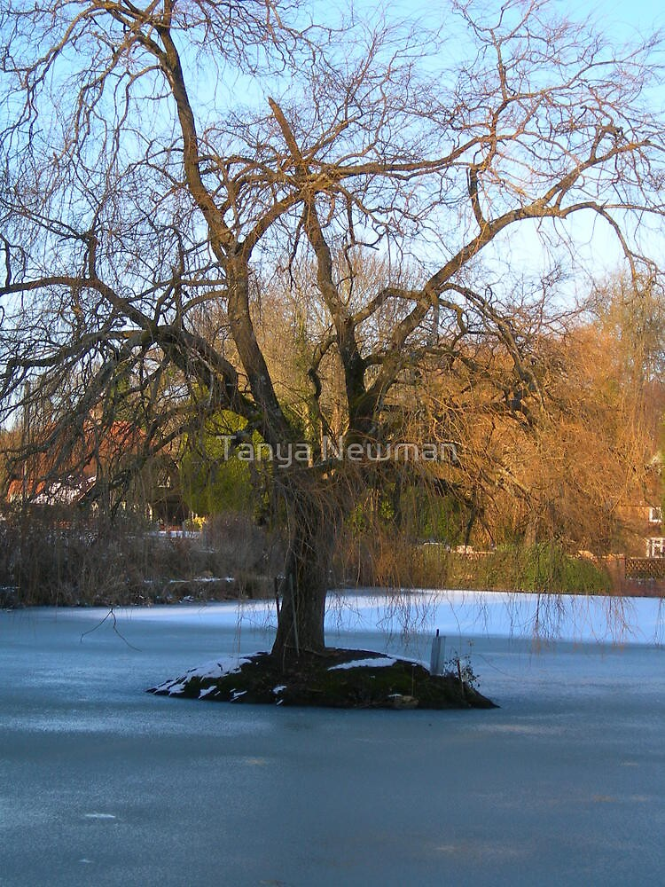 Cold Feet by Tanya Newman