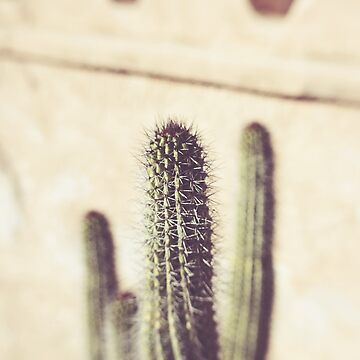 Prickly by CaliforniaPhoto