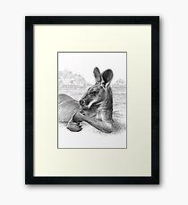 King Of The Plains - Kangaroo Framed Print