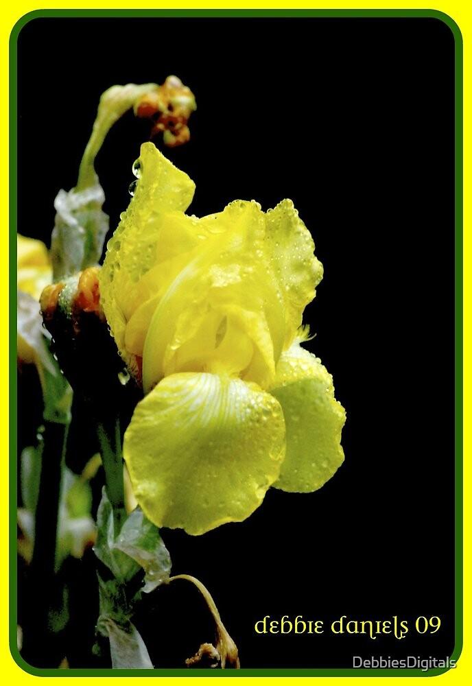 Yellow Iris by DebbiesDigitals