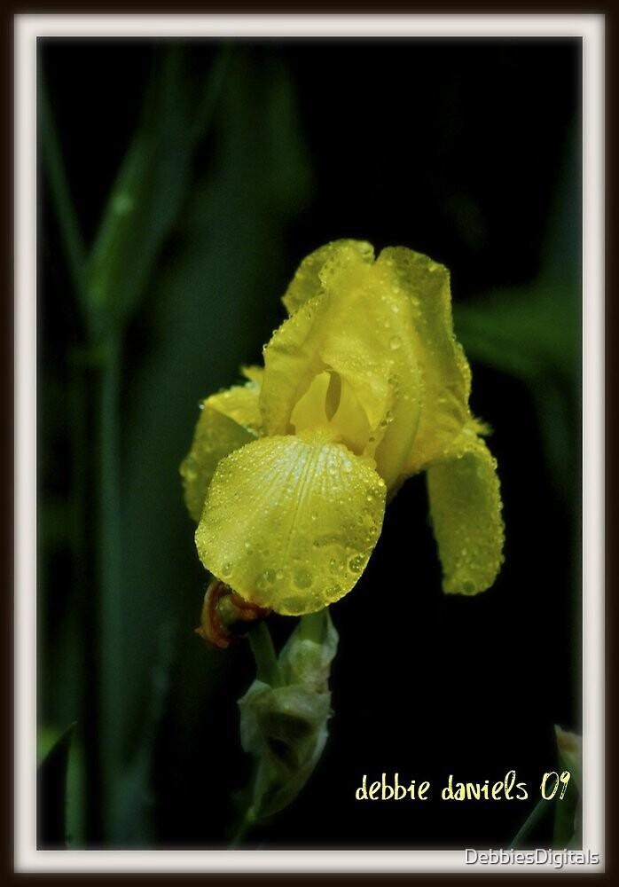 Yellow iris, after a rain by DebbiesDigitals