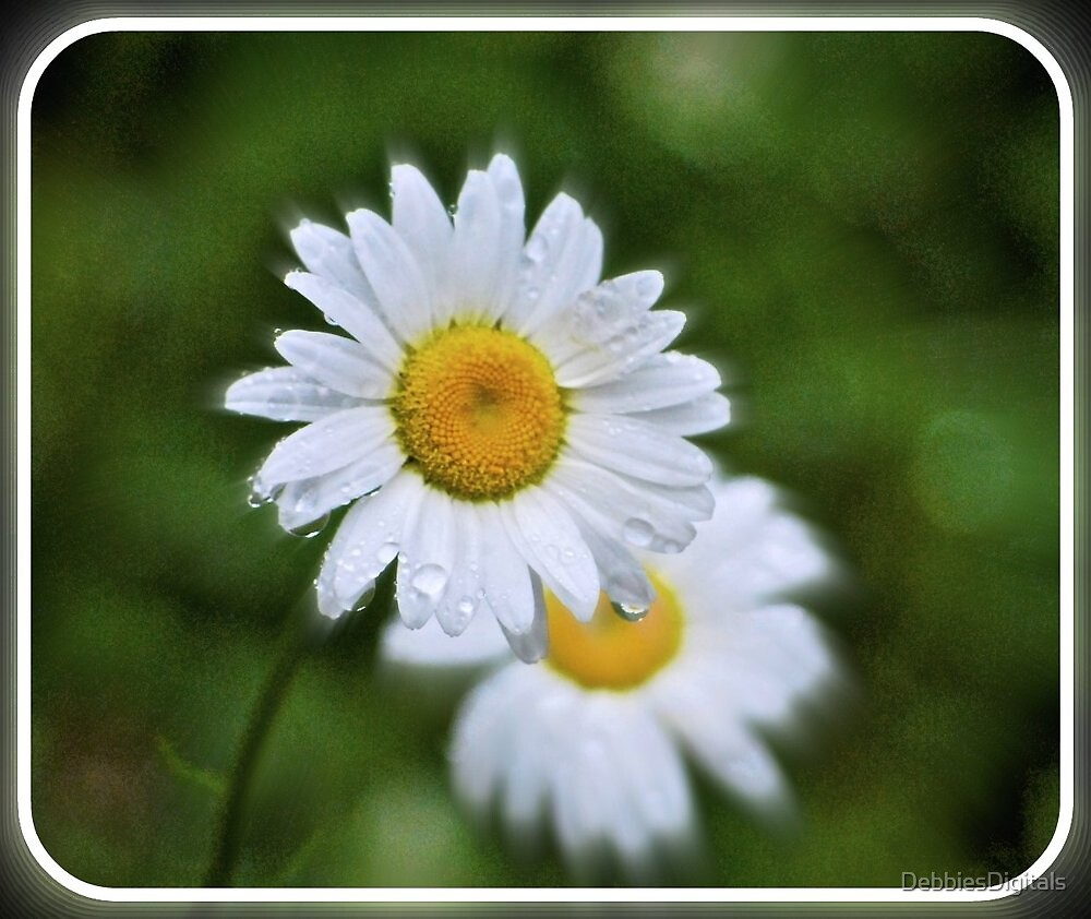 Daisies, the promise of spring by DebbiesDigitals