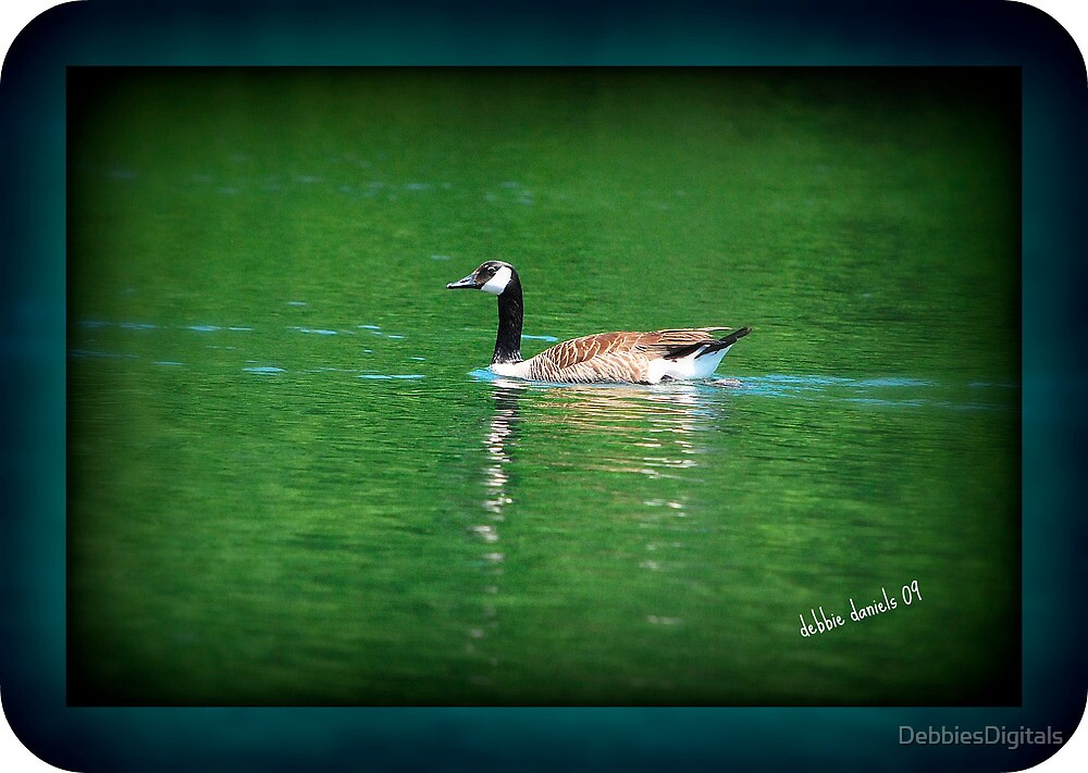 Canadian Goose on water by DebbiesDigitals