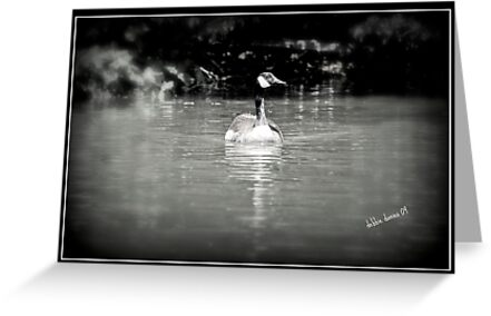 Canadian Goose gliding along by DebbiesDigitals