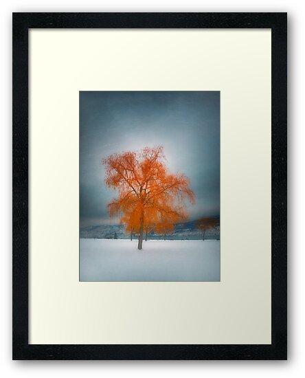 The Dreams of Winter by Tara  Turner