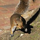 Squirrel by DebbiesDigitals
