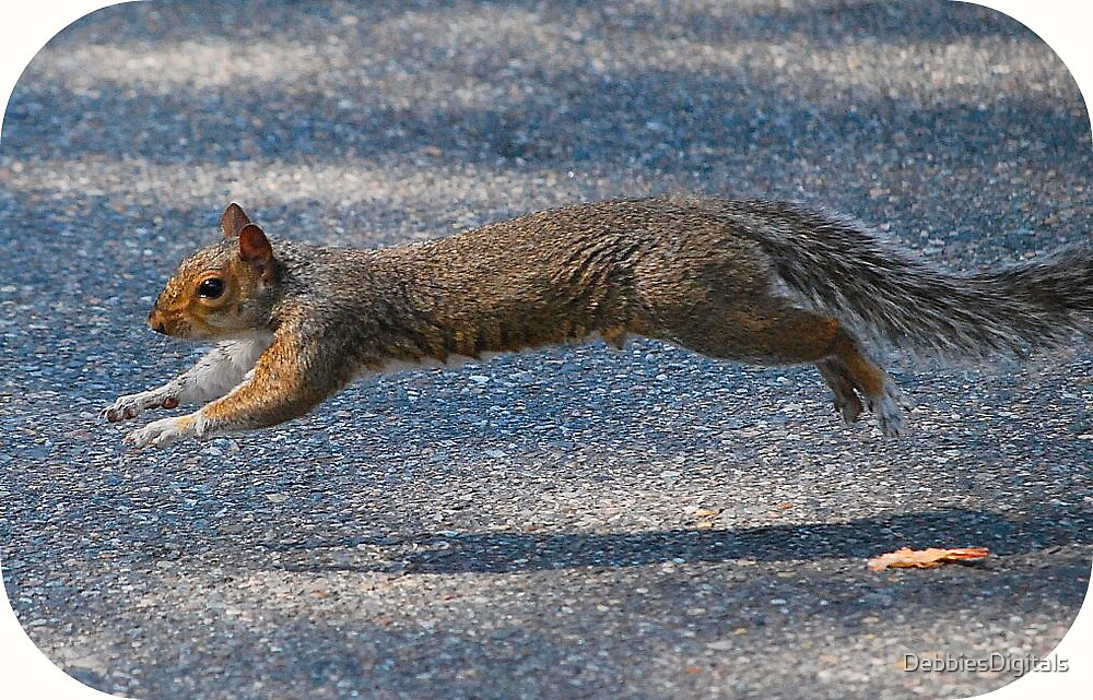Squirrel crossing by DebbiesDigitals