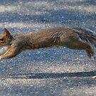Squirrel crossing by DebbiesDigitals