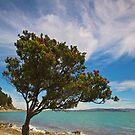 Maori Christmas Tree by Ken Wright