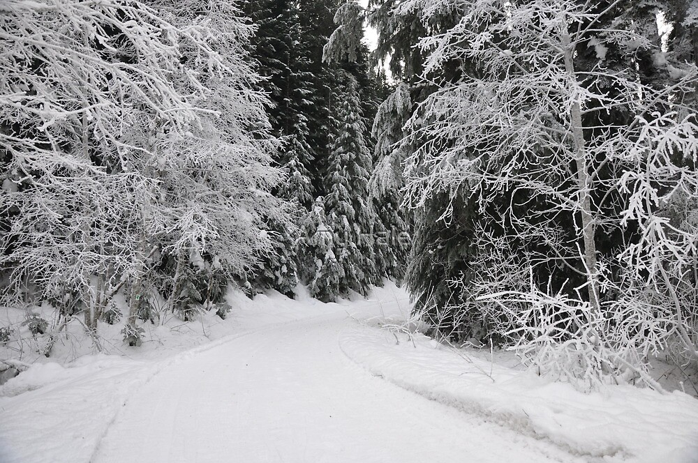 Winter Road by Amy Hale