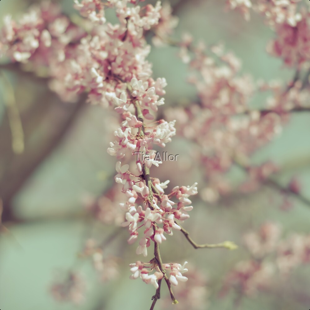 Pink Blooms by Tia Bailey