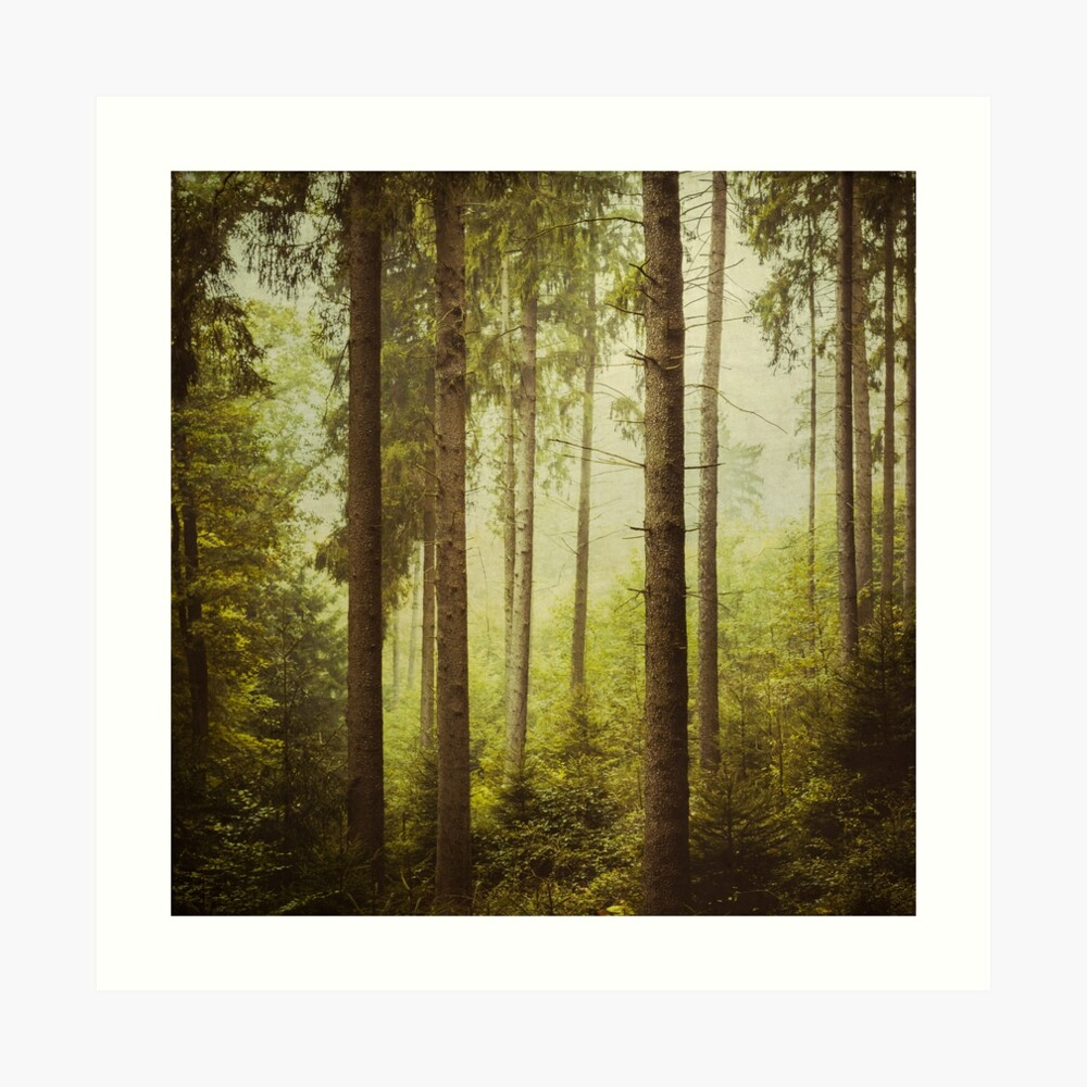 The Small And The Tall - Fir Forest Art Print