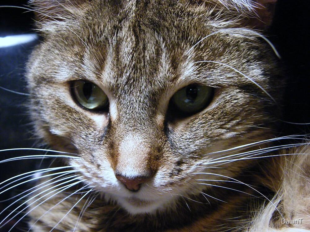 Dottie - My Computer Keyboard Kitty by DawnT