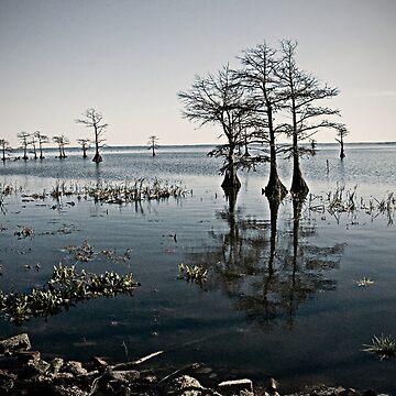 Coastal  by wittgraham
