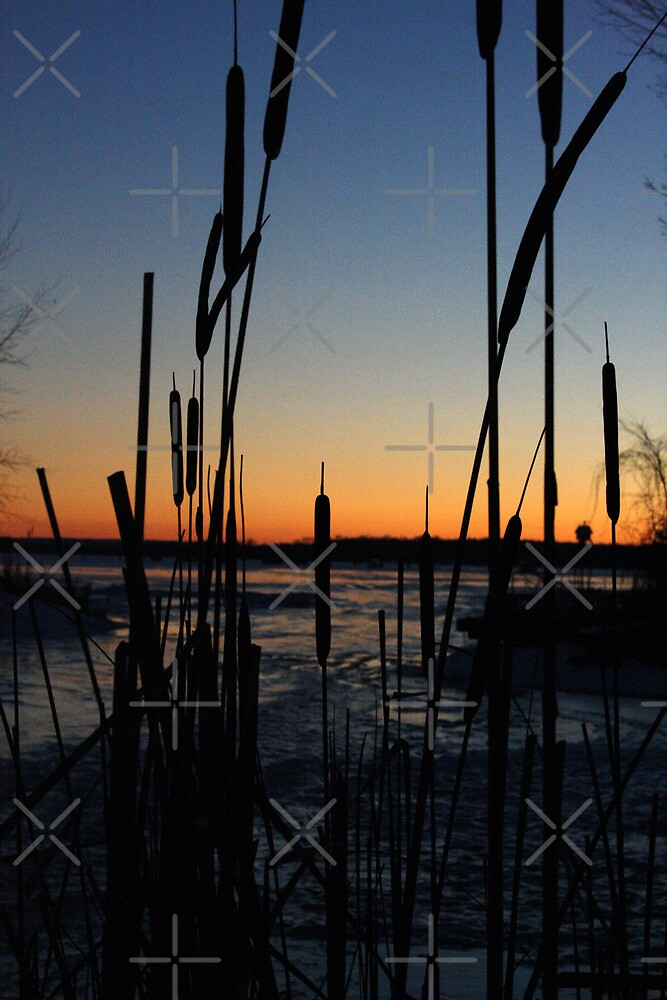 Frozen Sunset by Alyce Taylor