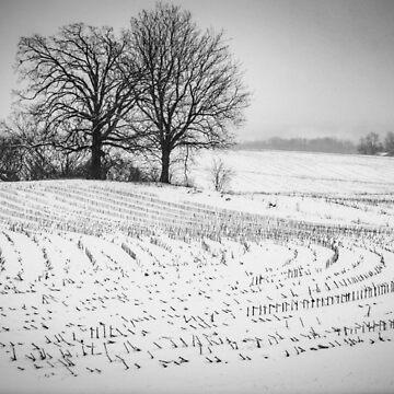 corn snow by KENDALLMcKERNON