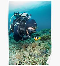 Diver and clown fish - Bali Poster
