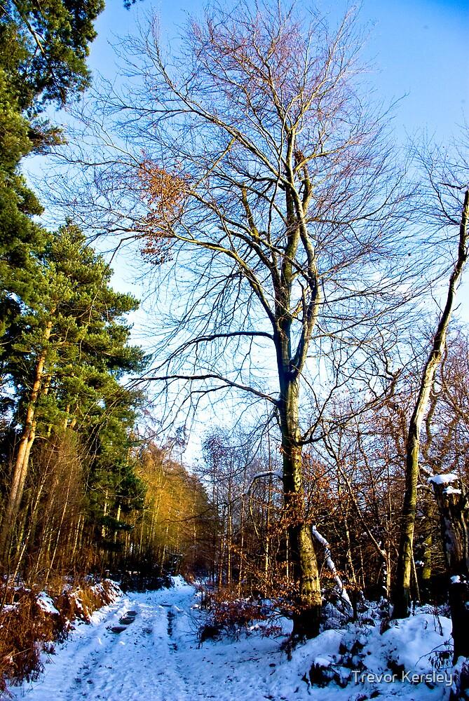 Snow Path #2 by Trevor Kersley