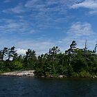 Windswept Pines - Georgian Bay Canadian Landscapes by Georgia Mizuleva