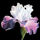 Floral Dream by portraitbyflora