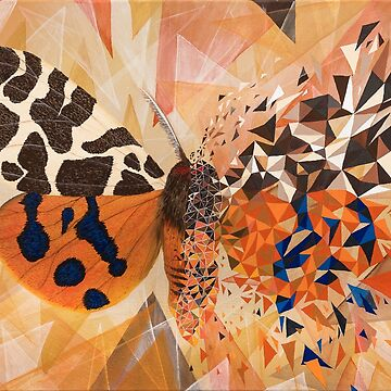 Orange butterfly and blue geometric explosion by artetbe