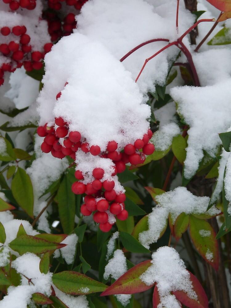 Red berries under the snow by presbi