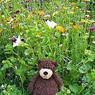 Teddy Bear Wild Flowers by Dean Harkness
