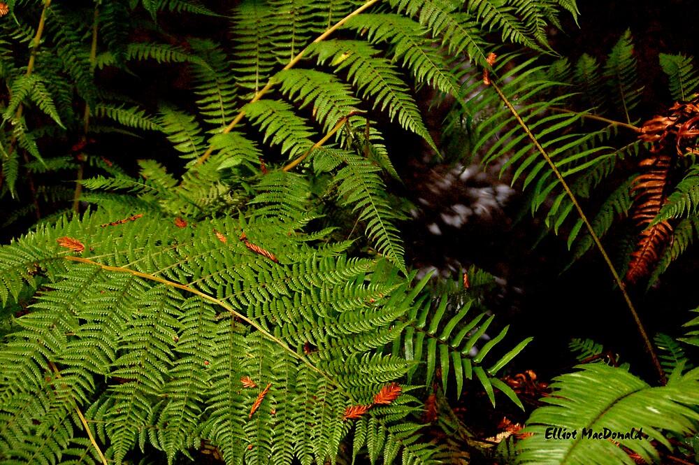 Muir Woods 5 by Elliot MacDonald