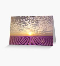 Sunset over a summer lavender field in Provence, France Greeting Card