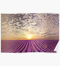 Sunset over a summer lavender field in Provence, France Poster