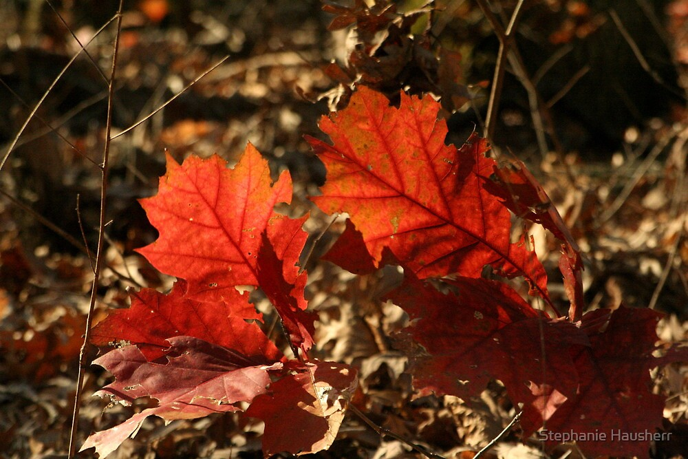 Color of Fall by Stephanie Hausherr