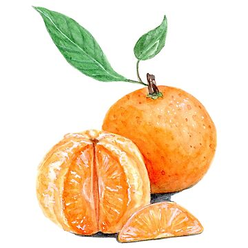 Mandarine - Watercolour Painting by patti2905