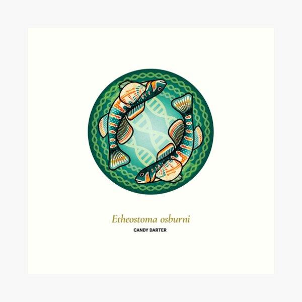 The Circles of Life: Candy Darter Art Print