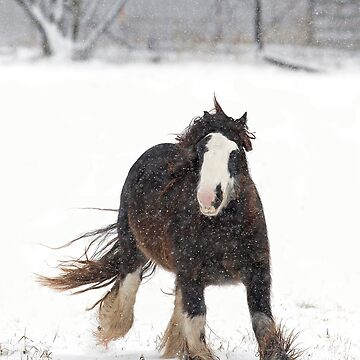 Clydesdale horse in winter by darby8