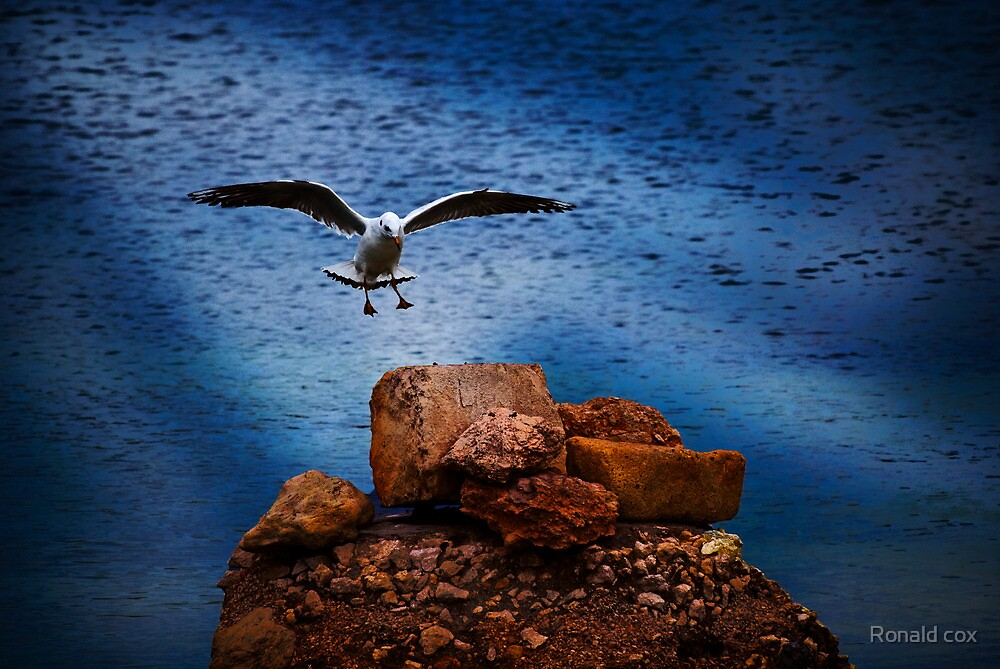 Smooth Landing by Ronald cox