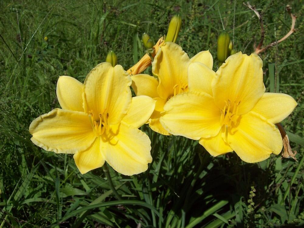 yellow-sun by helmer