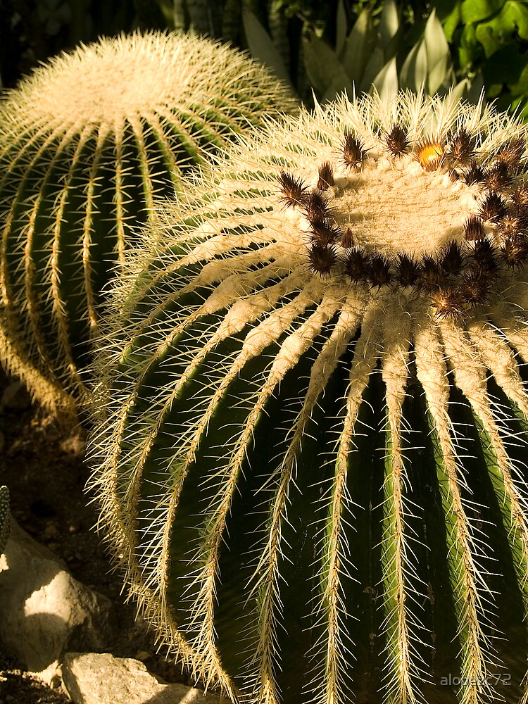 Cactus in greenhouse by alopezc72