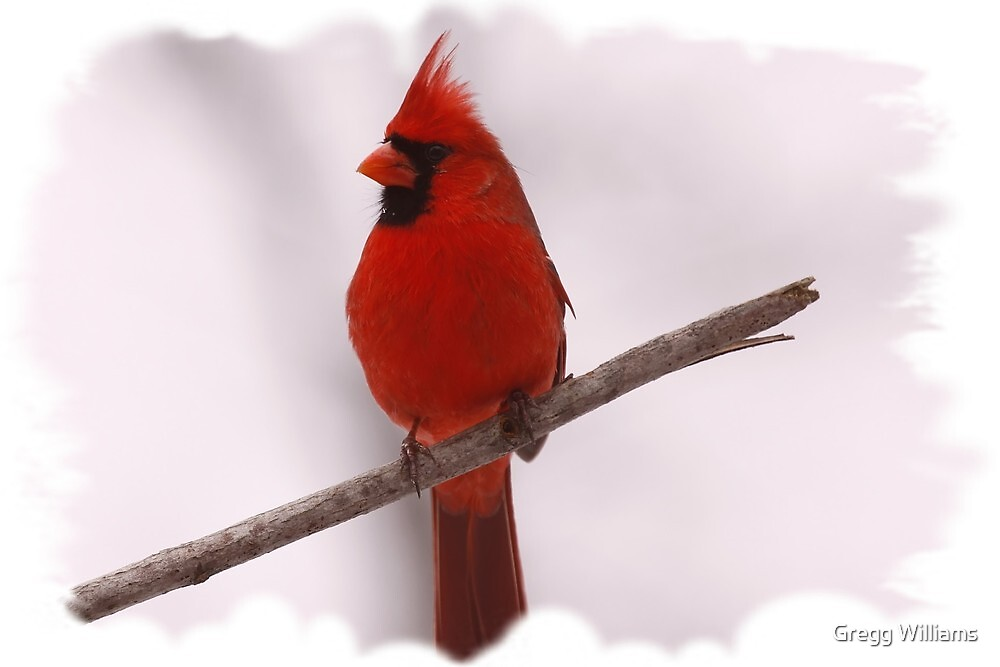 Christmas Cardinal by Gregg Williams