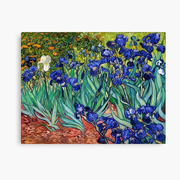 Irises by Vincent van Gogh Canvas Print