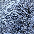 skeletal like trees - winter NI by SNAPPYDAVE