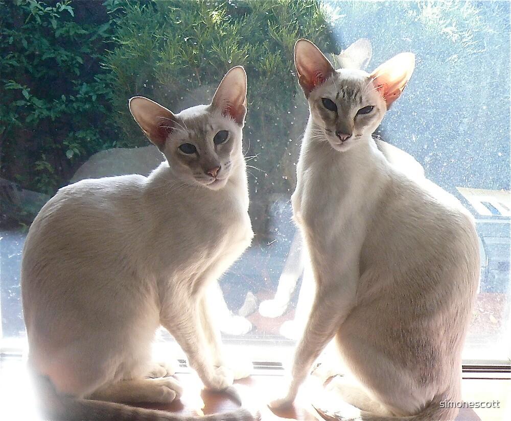 Misha and Maya by simonescott