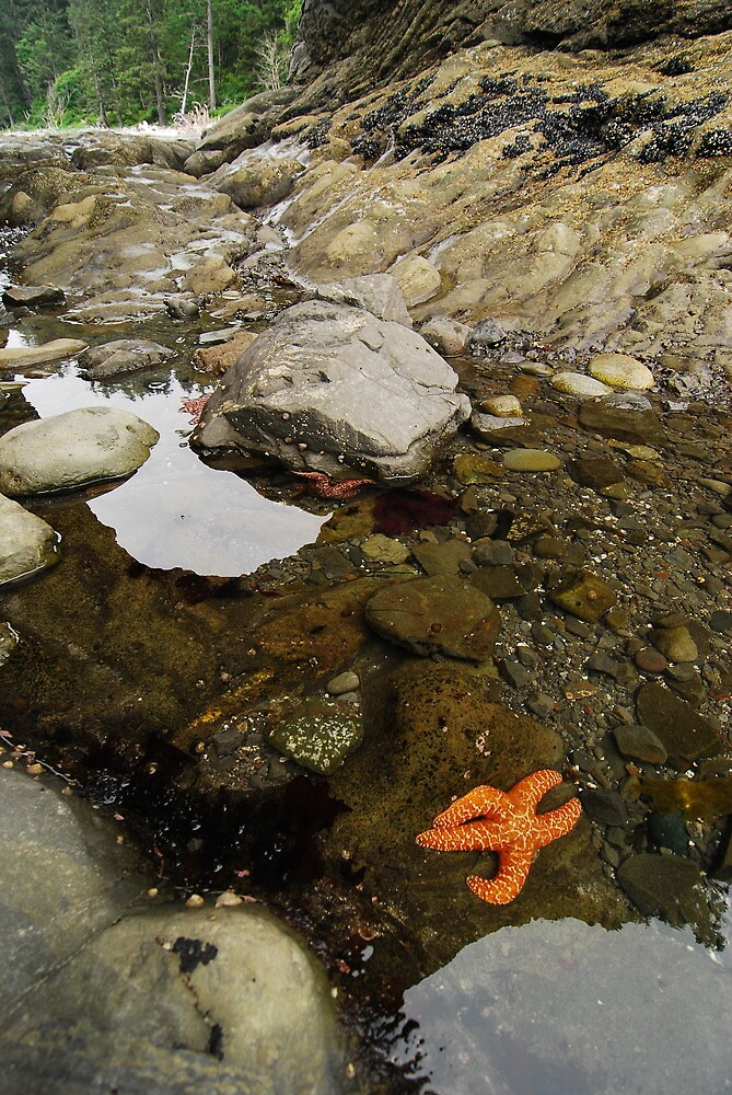 Starfish by Octoman