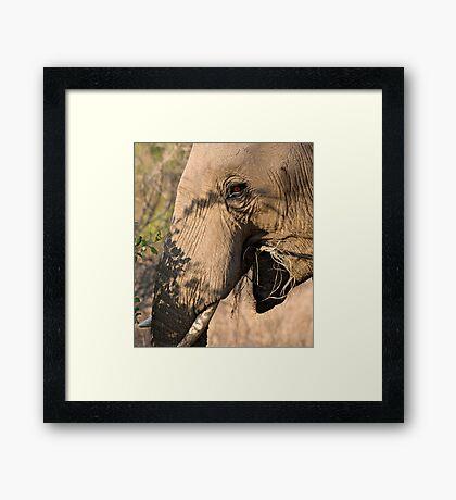 Elephant Brunch Framed Print
